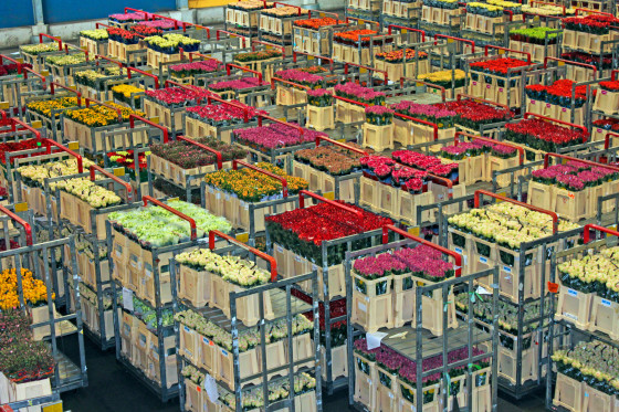 Flower Auction in The Netherlands