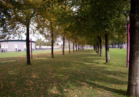 Trees in museumplein