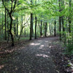 The beautiful, forested scenery in Amsterdamse Bos