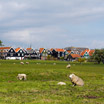 Sheep grazing in the field as you enter the town of Marken