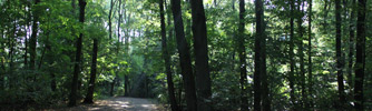 Amsterdamse Bos (Amsterdam Forest)